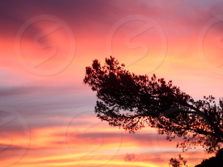 sunset red sky pine tree photo