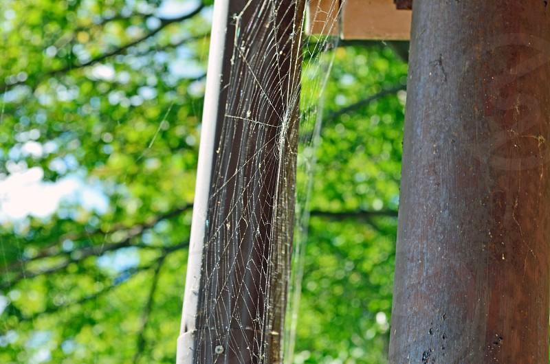 spiderweb photo