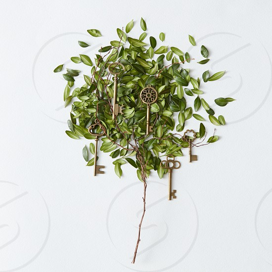 Tree with leaves and golden keys for any locks from different doors isolated on white background. Flora concept. photo