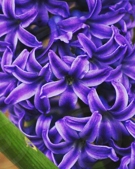 Pretty Flowers photo