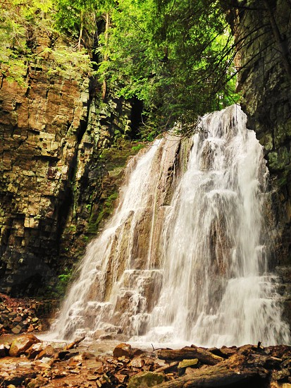 forest water falls with trees photo
