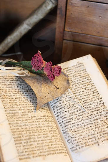 Old book and roses photo