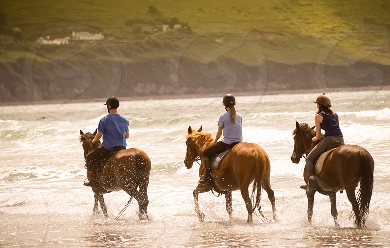 Summer. Beach. Horses. photo