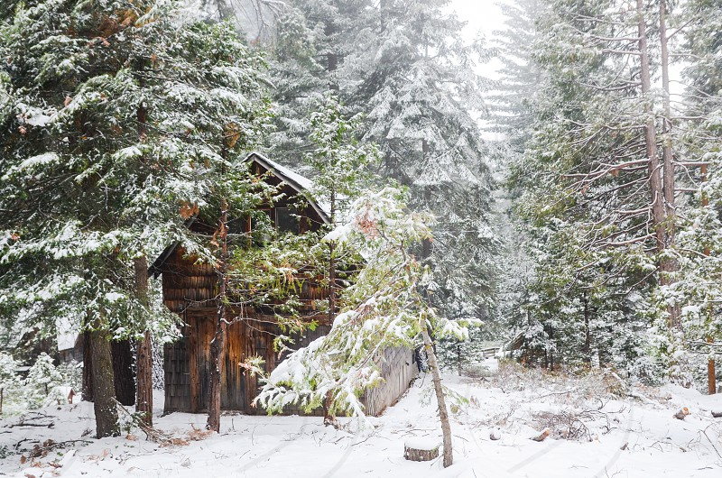 snow cabin forest winter photo