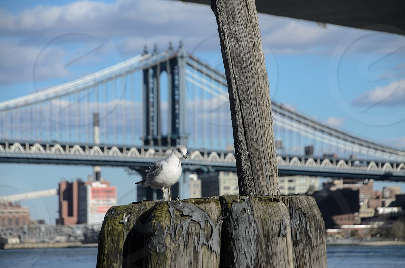 seagull on wooden stump photo