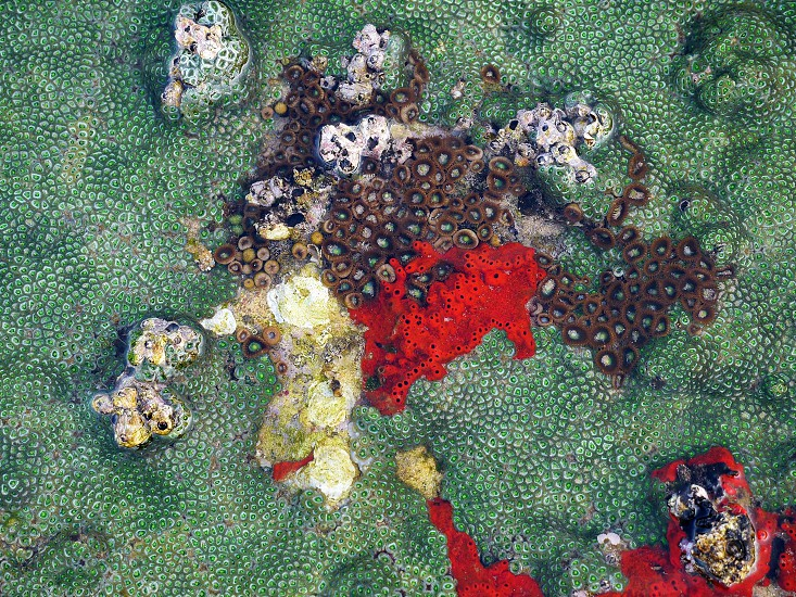 Colorful ocean Coral red green photo