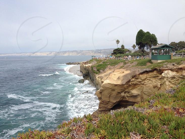 green grass on seashore photo