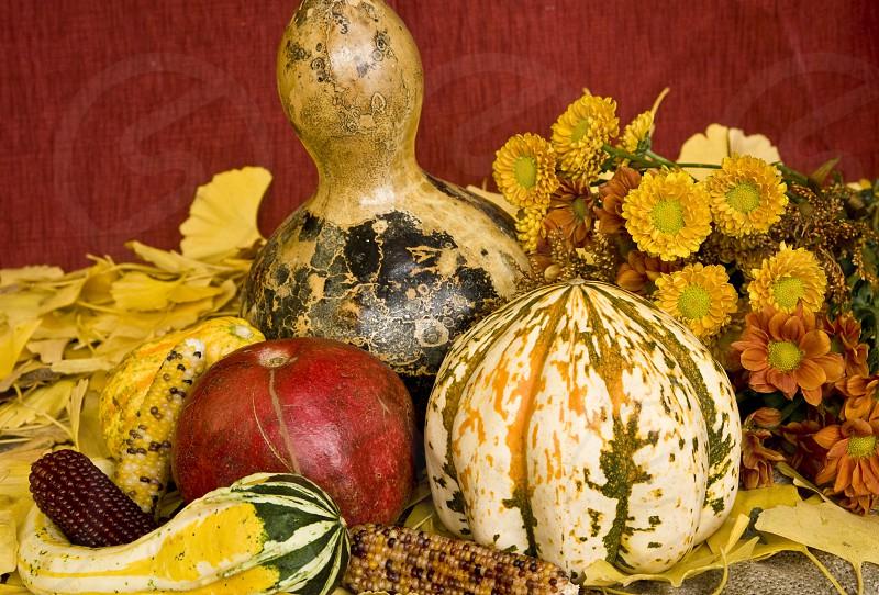 Autumn Still Life photo