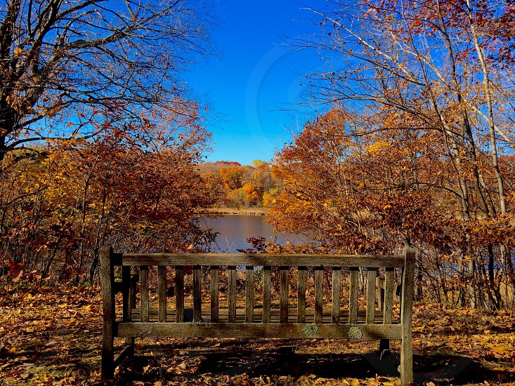 A fall view from a bench at the arboretum in Minnesota photo