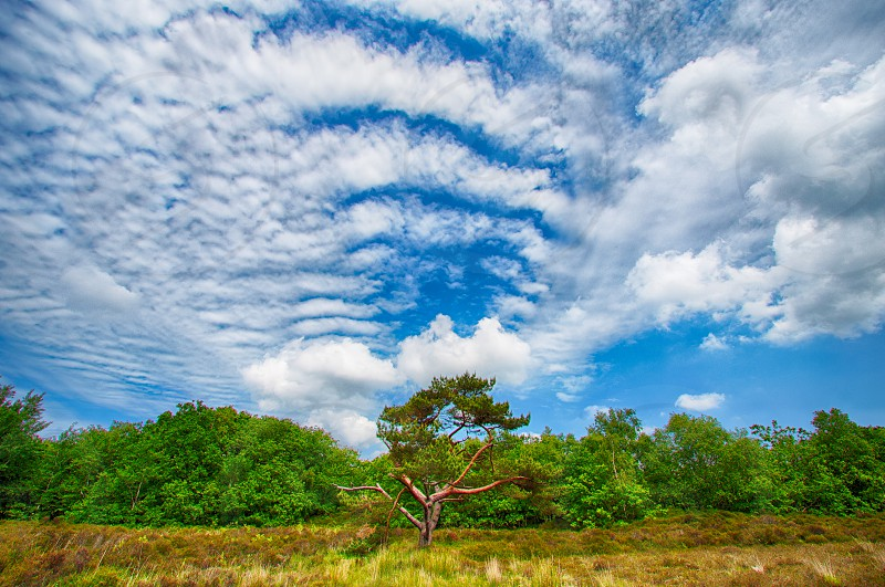 green trees and brown weeds under white clouds and blue sky photo