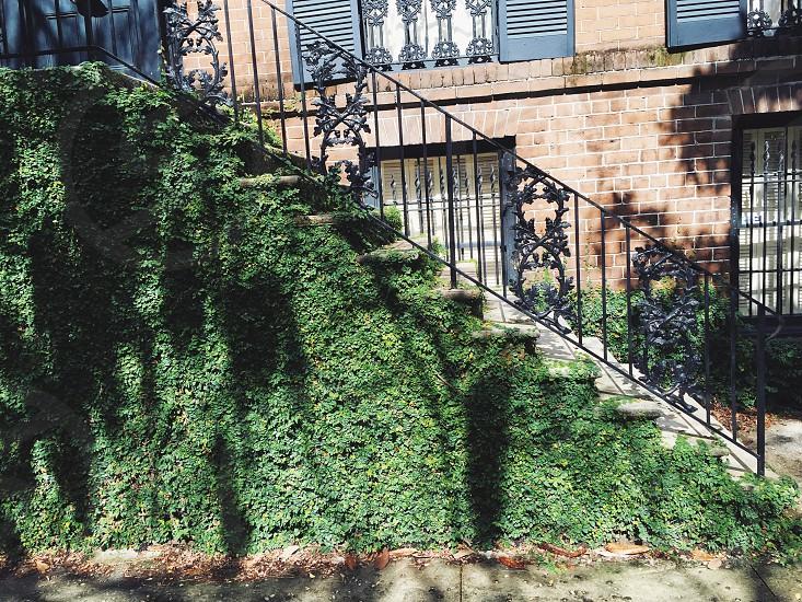 Savannah ivy building shadows photo