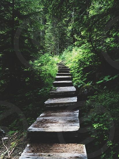 wood steps photo