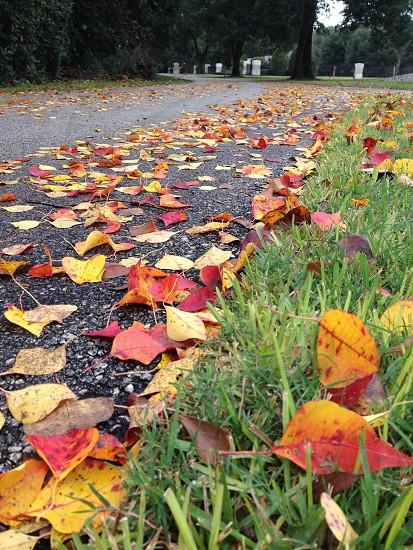 leaves on road photo
