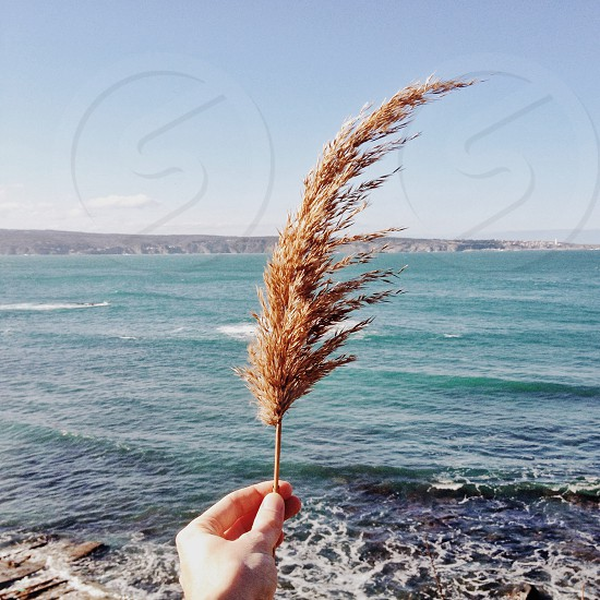 The wind photo