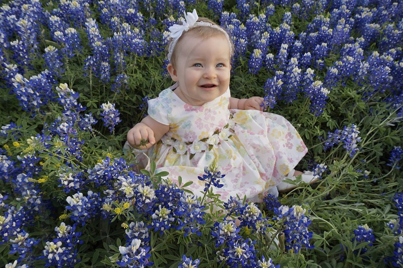 Baby texas wildflowers blue bonnets photo