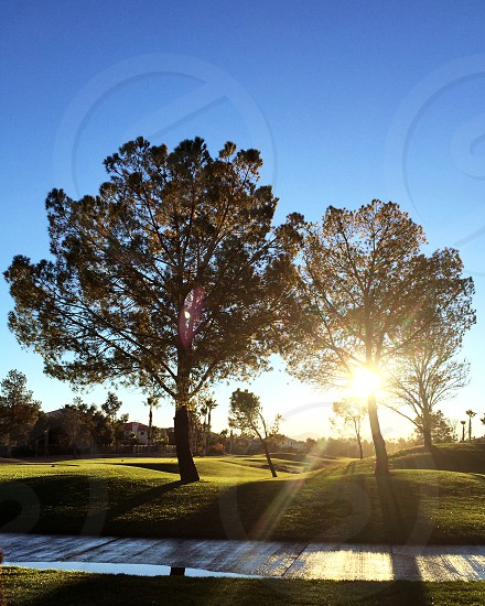 morning light sun trees morning sunflare sunshine two color warm photo