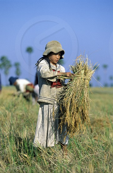 farmers at the ricefield in a Farmer village outside of the city of phnom penh in cambodia in southeastasia.  photo