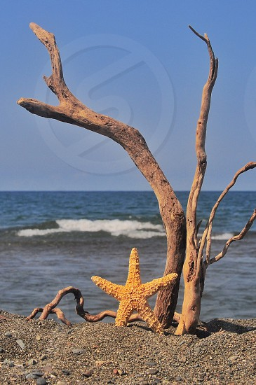 yellow starfish near brown twigs photo