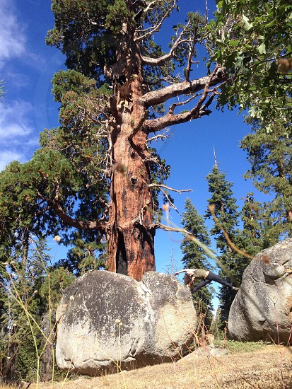 Sequoia National Park photo