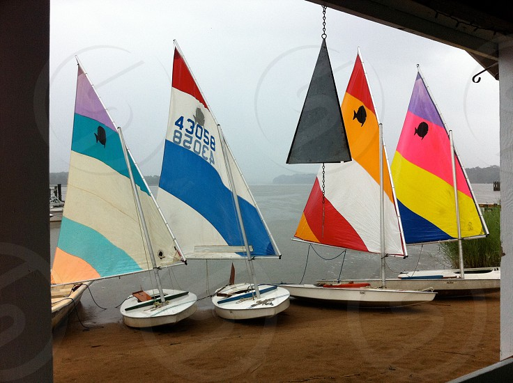 Sunfishes ready to race photo