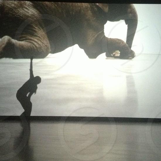 brown elephant photo