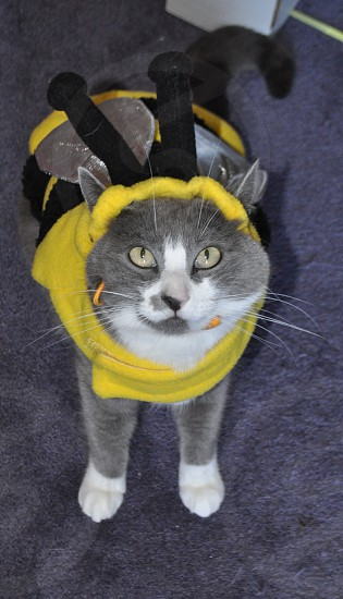 Adorable cat in a bumble bee costume funny photo