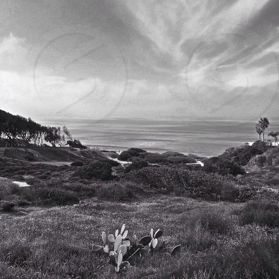 greyscale photography of cactus near ocean photo