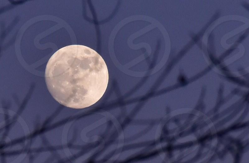 Spooky night sky midnight full moon lunar ominous Violet moonrise autumn trees limbs Stark photo