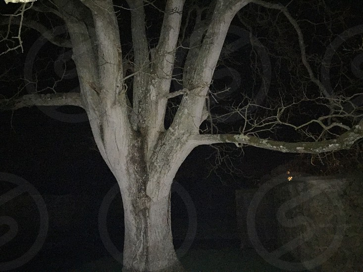 Tree at night.  photo