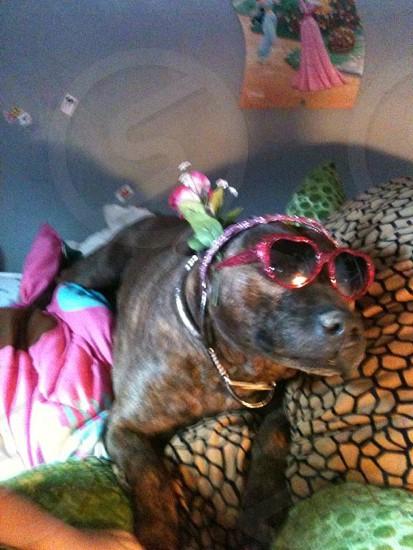 Dress up• cool shades• dog photo