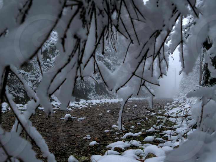 Under the snow - Cindrel mountains Paltinis resort area Sibiu county Romania 1100m 22-11-2014 photo