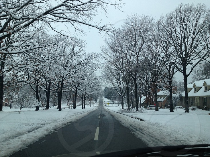 vehicle on the road near snow covered withered trees below gloomy sky during daytime photo