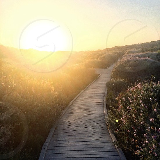 wood walkway through the flowering bushes at sunset photo