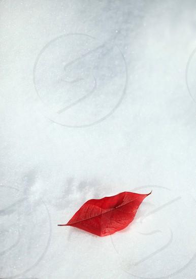 winter liss photo