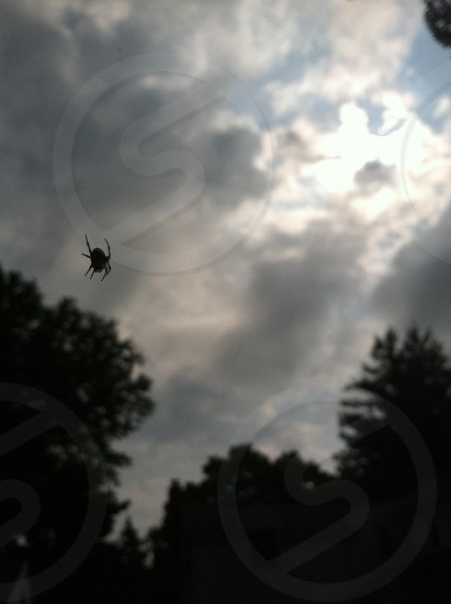 Spider in the Sky photo