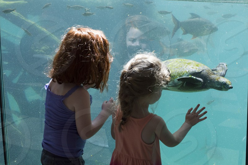 Two young girls watching a turtle swim by in a large aquarium at the zoo photo
