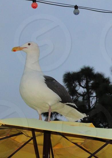 white and gray bird photo