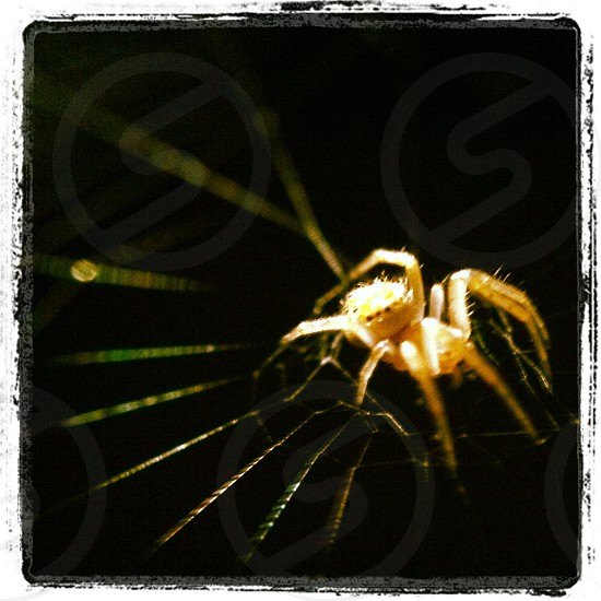 white spider photo