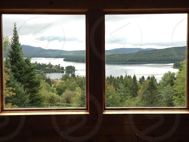 green tall pine tree viewed on window photo