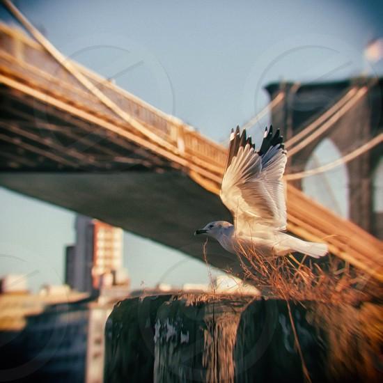 white and black humming bird photo