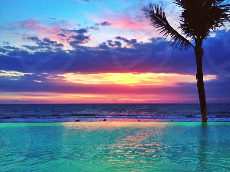 palm tree on a blue pool photo