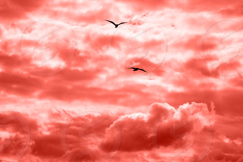 Bright sunlight through clouds against clear sky in a color of ear 2019 Living Coral two flying seagulls on a background of a sky. photo
