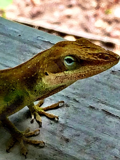 green porch critter photo