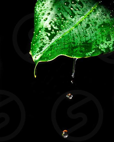 Fine art high speed water drop photo