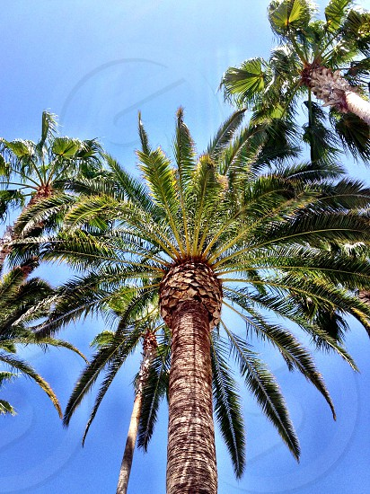lower angle view of palm trees photo