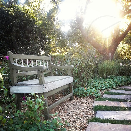 Park bench sunflare pathway flowers photo