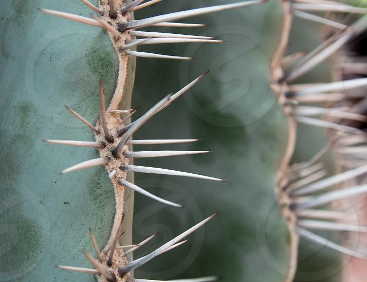 Cactus plant detail photo