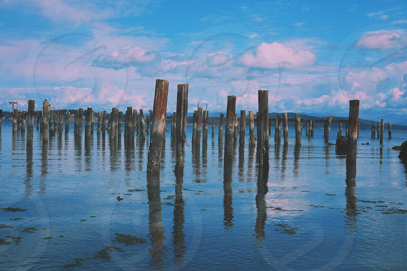 Reflection wood stumps ocean beach photo