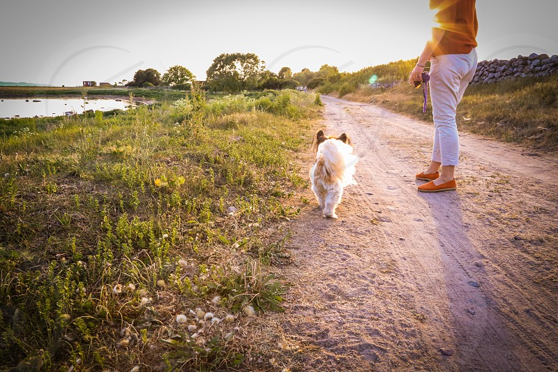 Sun rays nature dog walk  road dog sunlight woman  coastal  landscape  photo