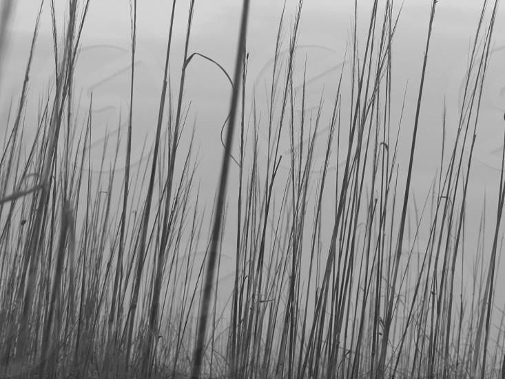Beach tybee island nature black and white photo